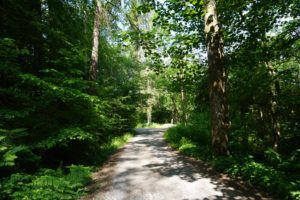 Mabie Forest trails